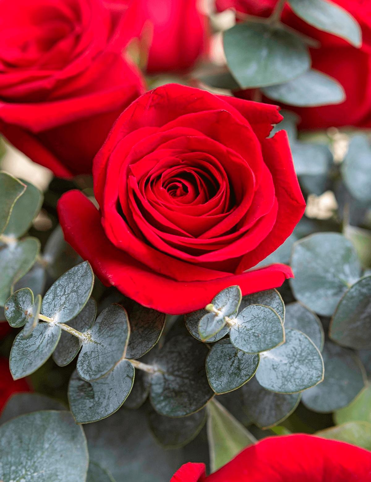 Romance Vermelho
